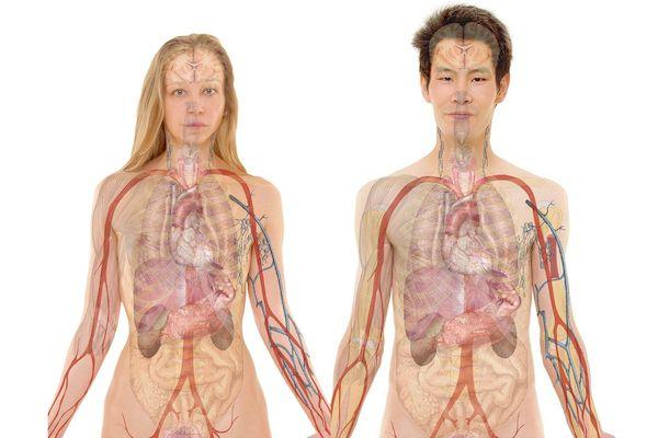 ¿Conoces el Sistema Nervioso Autónomo o SNA?
